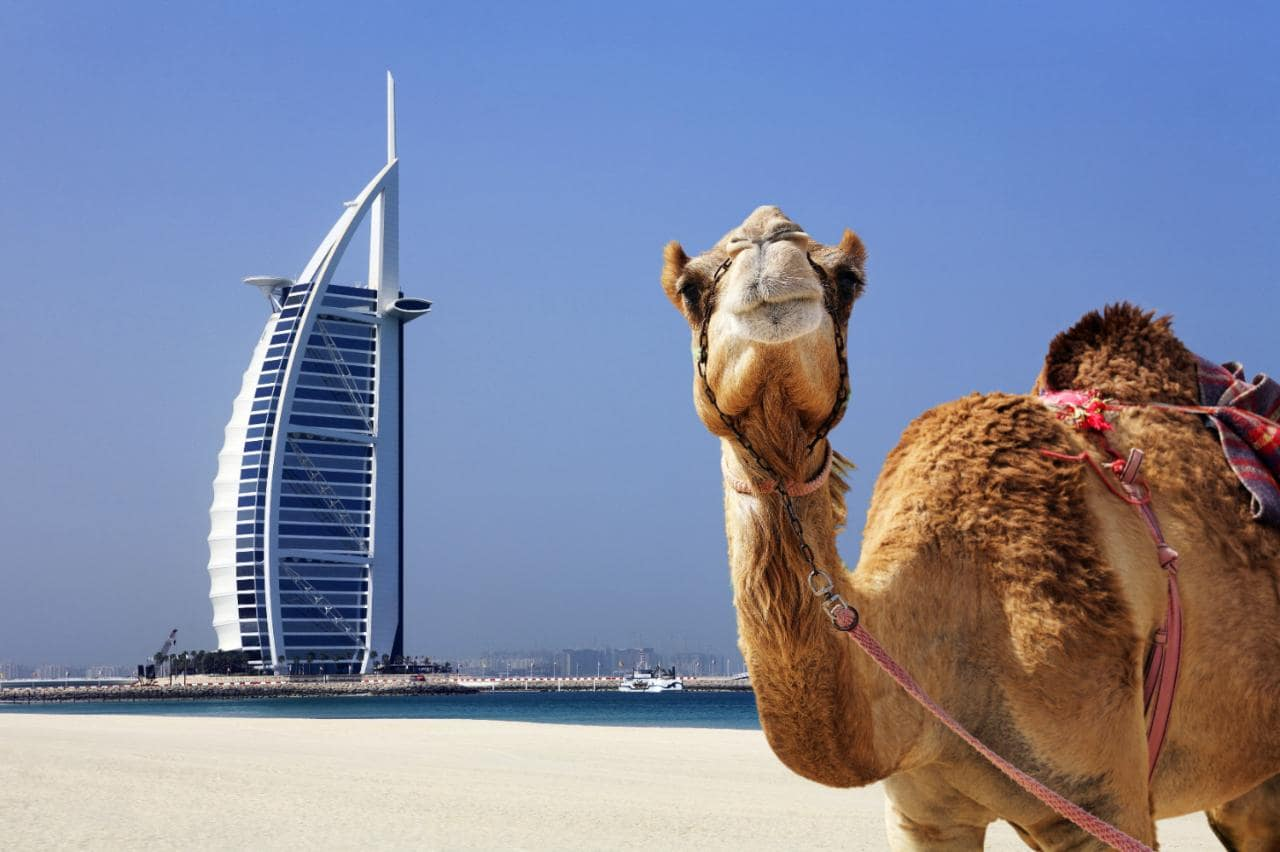 Camello y Burj Al Arab al fondo