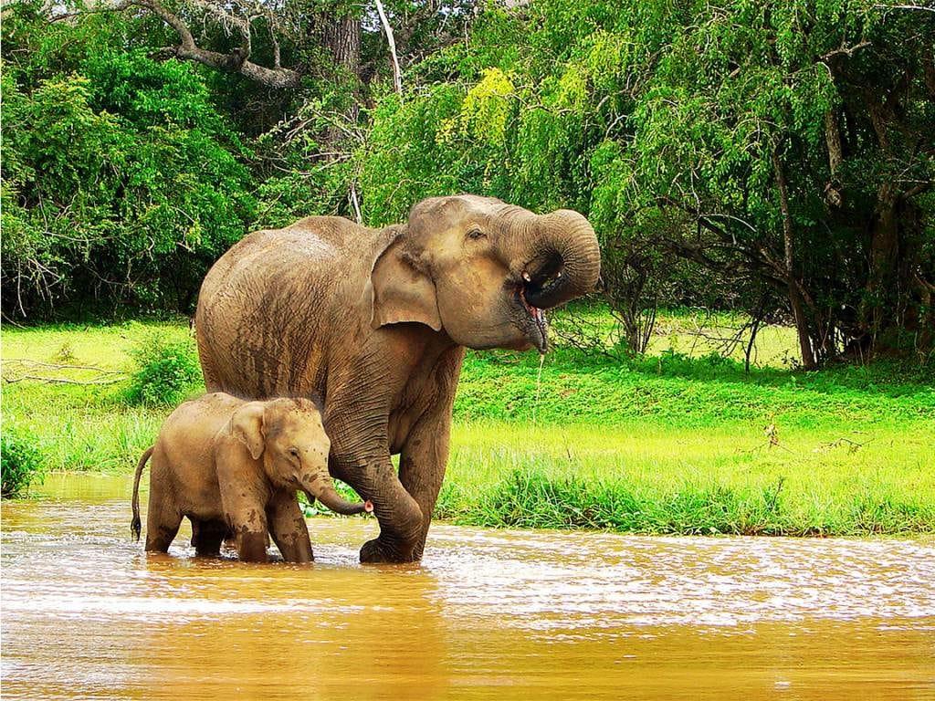 Elefantes bañandose en el rio