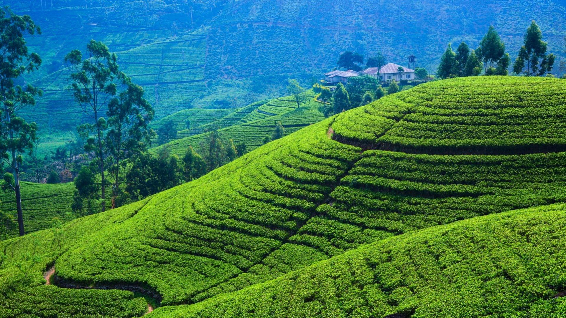 paisaje verde de Sri Lanka