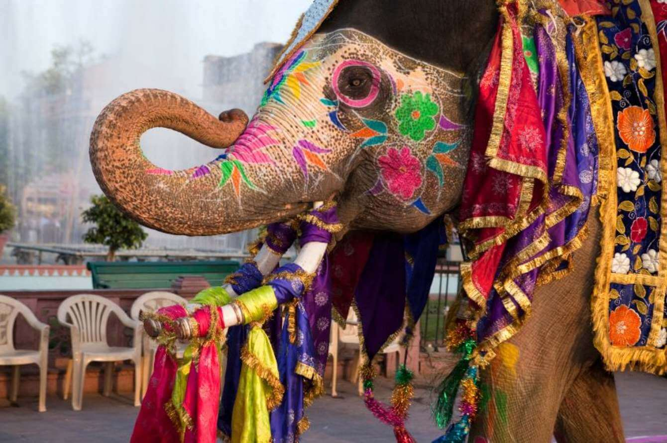 Elefante con decoraciones típicas de India