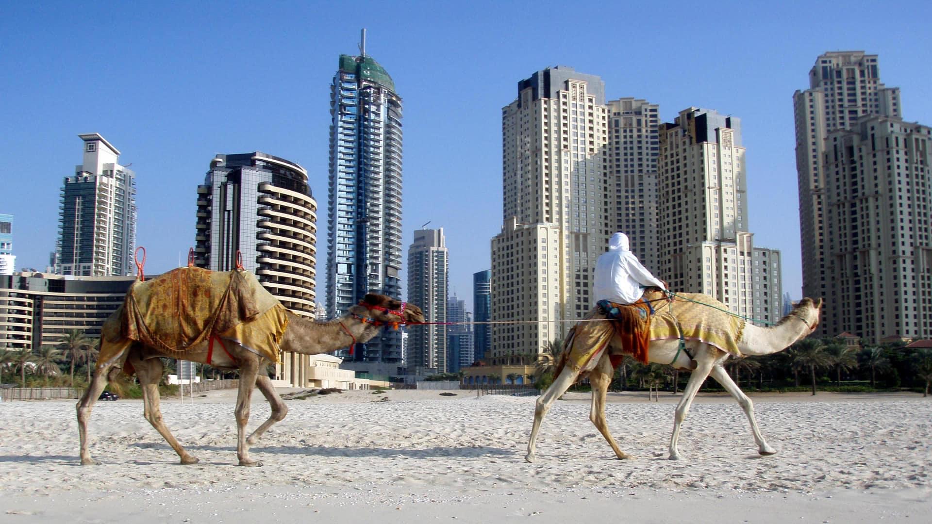 Camellos y rascacielos en los Emiratos Árabes Unidos