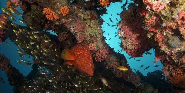 arrecifes de fushifaru maldives
