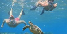 snorkelinbg con tortuga en Fihalhohi Island Resort